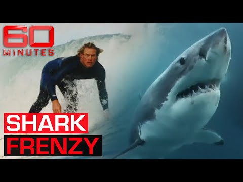 Frenzy (2004) - Australia's Shark Safety Debate | 60 Minutes Australia