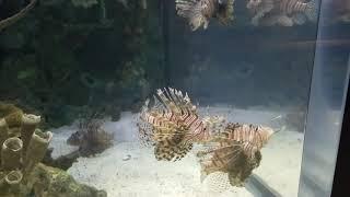 Aquarium in vegas