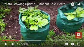Potato Growing Update, Dinosaur Kale, Beets, Carrots, Tomatoes, Spinach, Compost