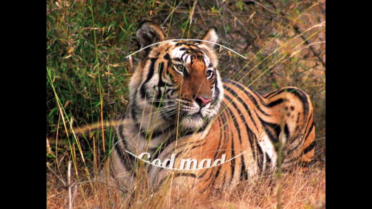 White Tiger Forest Lodge, Bandhavgarh - MPSTDC