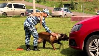 Кинологи Красноярска