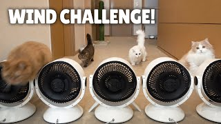 Extreme Wind Challenge! Will the Cats Be Blown Away? | Kittisaurus