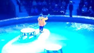 Шоу индийских слонов.Тульский цирк.