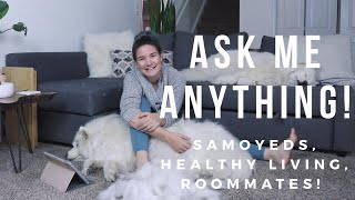 VERY Chatty Ask Me Anything while Grooming! | Samoyed Care, Healthy Living, Emzotic as a Roommate!