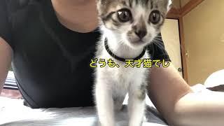 子猫 #小動物 #子猫保護 #kittens #猫 #cat https://www.instagram.com/currymen_koneko https://twitter.com/off3877791 #子猫お風呂 くら寿司 ロッテ 学術会議とは ...