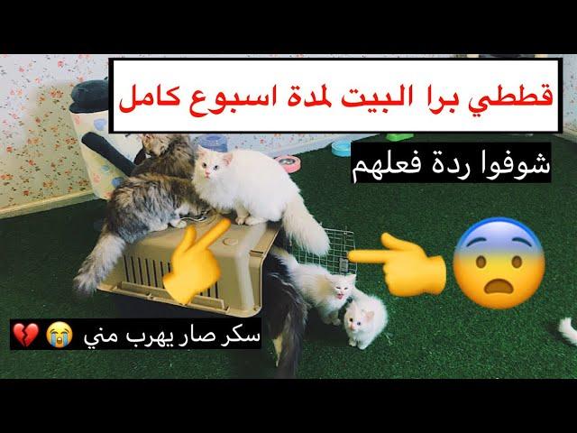 قططي لمدة اسبوع برا البيت 😨 و سكر صار يخاف ويهرب مني 😭💔 / Mohamed Vlog
