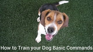 How To Train Your Dog Basic Commands