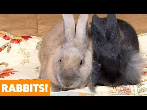Adorable Rabbits | Funny Pet Videos