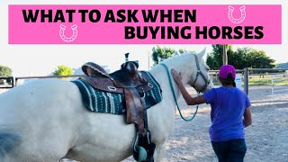What questions to ask when buying a horse