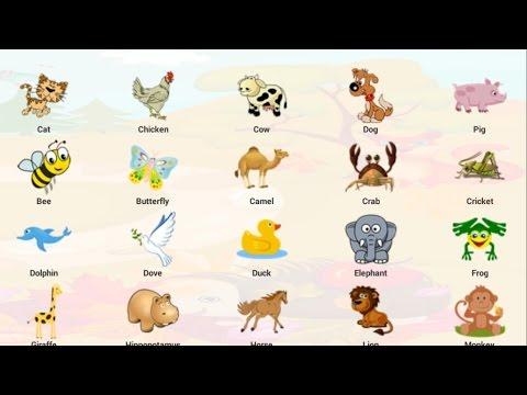 สัตว์โลกน่ารัก คำศัพท์ภาษาไทย ภาษาอังกฤษ วีดีโอสำหรับเด็ก คำศัพท์สำหรับเด็ก