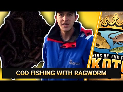 COD FISHING WITH RAGWORM || RIVER MEDWAY, GUN WHARF