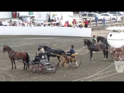 NE Morgan Horse Show Carriage Driving w/ Tim Morrell West Brookfield MA  2012