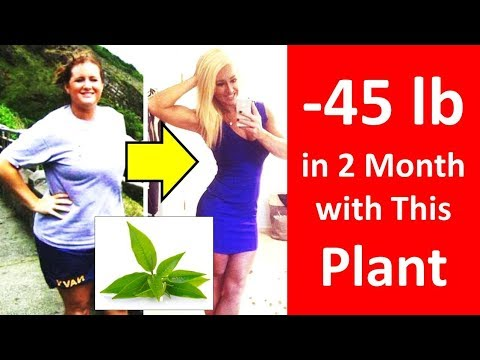 How to Lose Weight in 2 Months at Home without Exercise – Lose Weight Fast with Matcha Tea