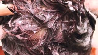 Hair Loss Shampoo   Hair Growth Shampoo - Nisim New Hair BioFactors