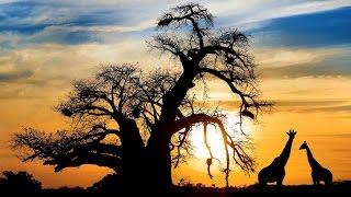 Botswana Travel -  2017