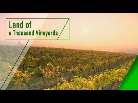 Weinviertel - Land of a Thousand Vineyards - The Secrets of Nature