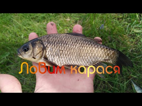 Рыбалка весной. Ловим карася на поплавок.