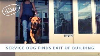 Service Dog Task 'EXIT' Demo