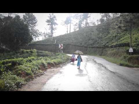 Dilmah Tea Estate - New Deniyaya