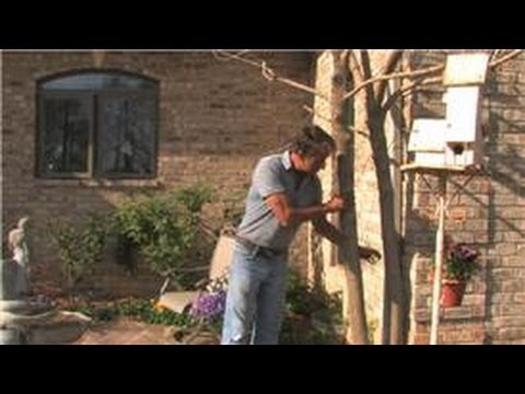 Landscaping Tips How To Landscape Around A House With