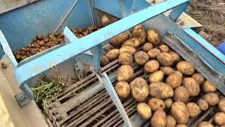 Karlik Kopie Kartofle- wykopki 2017