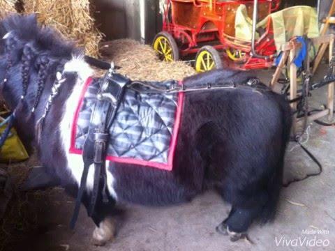 Diy Dekjes Maken Voor Je Paard Of Pony Hs Youtube