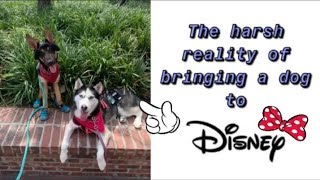 The Reality Of Bringing Your Dog To Disney...