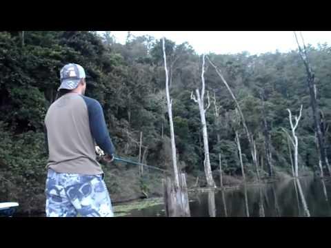 Saratoga Fishing in Australia サラトガ釣り オーストラリア