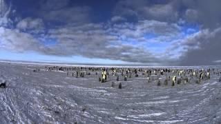 皇帝ペンギンの小さな集団のタイムラプスです。朝早くとか夕方ならもっ...