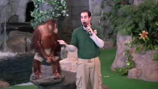 Orangutan Performs at Universal
