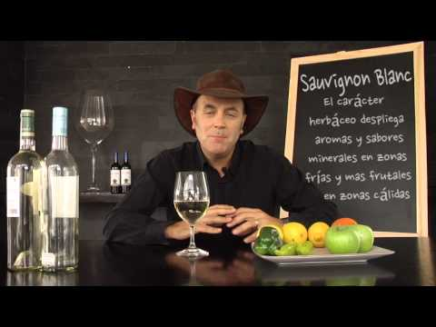Aprendiendo sobre Sauvignon Blanc