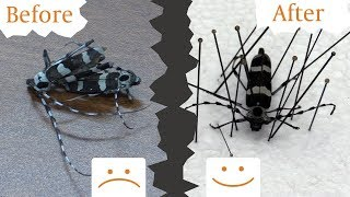How to Relax aฑd Pin Dehydrated Insects