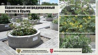 Карантинный интродукционный участок в Крыму.