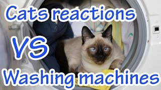 Cats reactions vs Washing machines