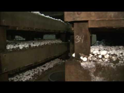 mushroom production Posts about mushroom growing in kenya written by necofa kenya.