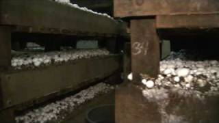 OETA Story on Mushroom Farming in Oklahoma aired on 07/28/09