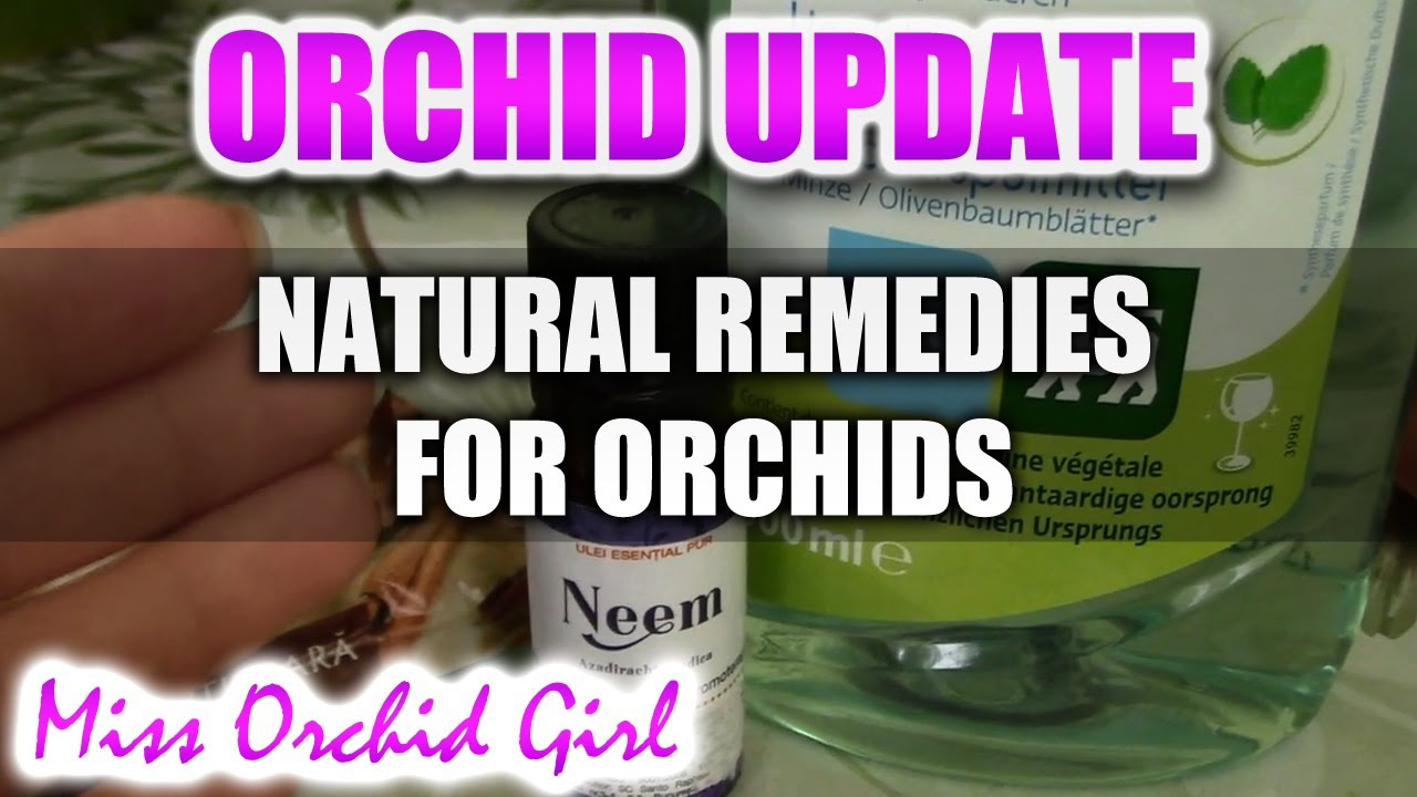 SOS Sick Orchids Part 2 - Non toxic fungicides and insecticides
