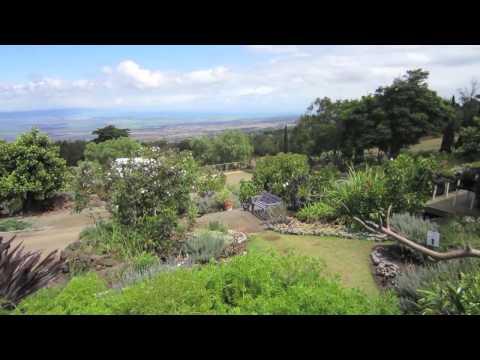 maui-lavender-farm