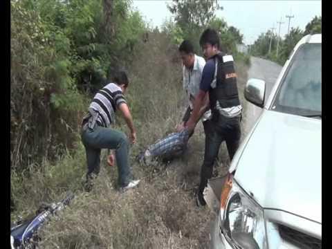 สุพรรณบุรี ตำรวจไล่ล่าจับแก๊งค้ายาบ้าเครือข่ายนักโทษเรือนจำเขาบินซิ่งรถหนีชนรถตำรวจ