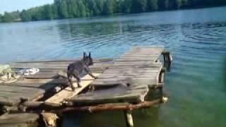Yoka - Pływajacy buldog