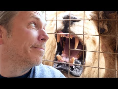 LION ATTACK!!! NEVER TURN YOUR BACK ON A BIG CAT!!! | BRIAN BARCZYK