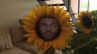 Secret Garden: Sunflowers Not Invited