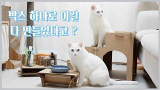박스 하나로 만든 고양이 용품! 계단, 식탁, 간식 선…