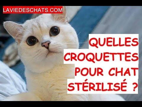 Quelles Croquettes Pour Chat 🐱 Stérilisé ?