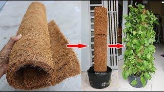 Thảm xơ dừa + lá trầu bà, hãy thử cách này | Coir mats + money plant, try this