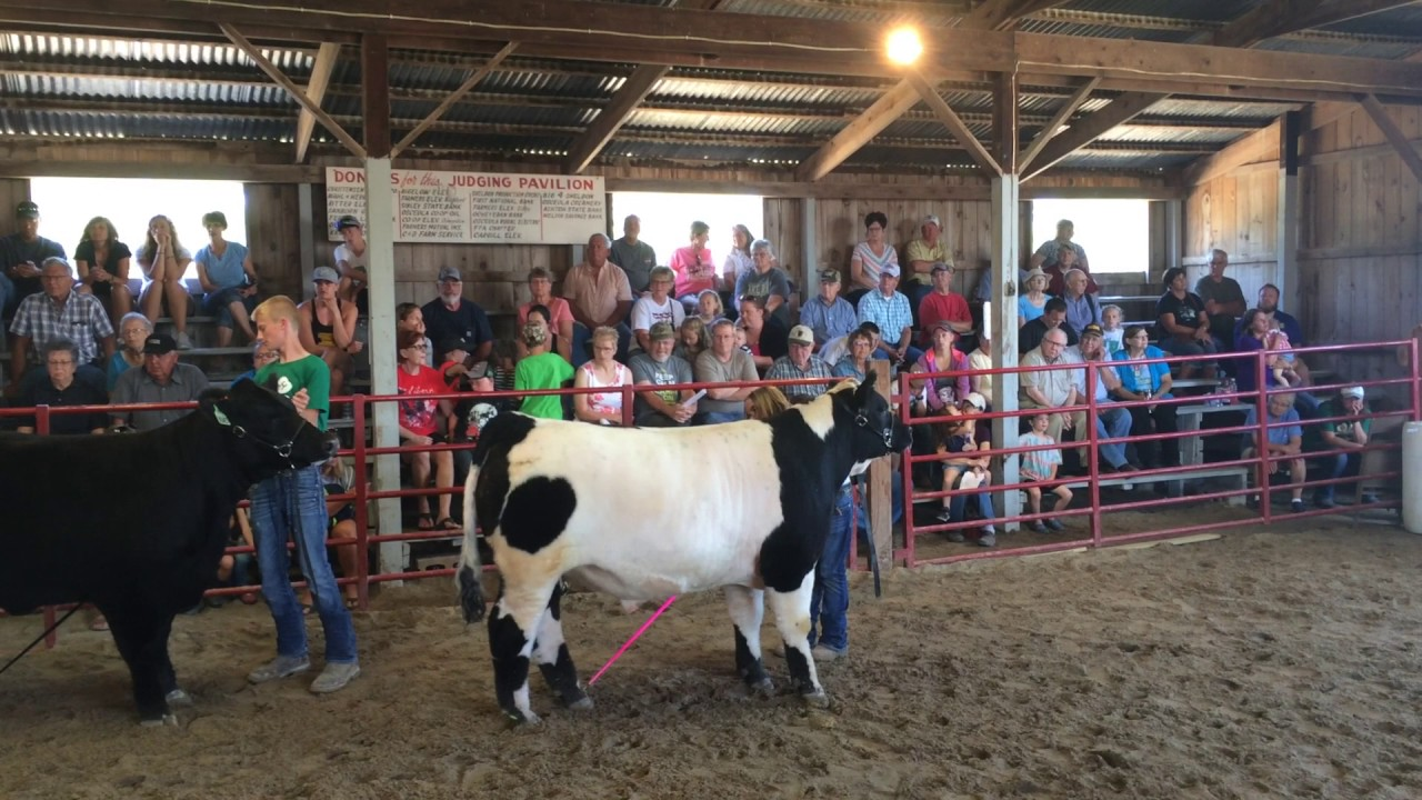 Overall Beef Showmanship title is announced at Osceola County Fair