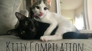 Kitty Compilation