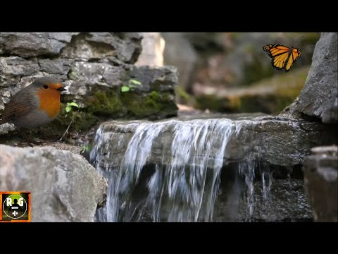 Relaxing Meditation Water Sounds - Music of Nature - Water Sound for Sleep, Study, Yoga, Healing