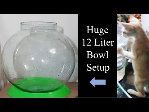 How To Set Up Biggest Fish Bowl ( 12 Litre ) | Fish Bowl Setup | Aquarium Setup | Easy Bowl Setup