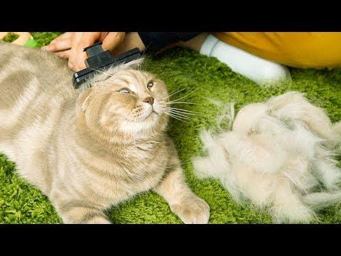 5마리 고양이 털은 얼마나 빠질까? - 고양이 키우기 전 봐야 할 영상